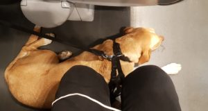 Cane sul treno