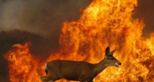 Animale tra le fiamme