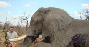Elefante trofeo di caccia