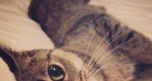 Un gattino