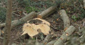 Riserva naturale Decima Malafede