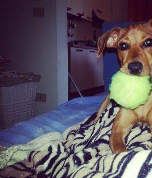 Il cane Pilù