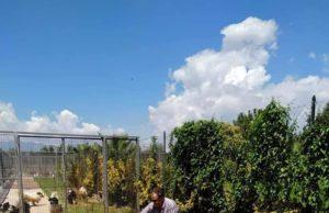 Il centro cinofilo Santa Lucia