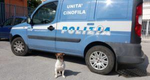 Pocho, il cane anti-droga di Napoli