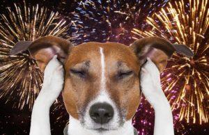 Cani e fuochi d'artificio
