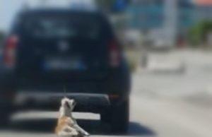 Il cane legato e trascinato a Trani