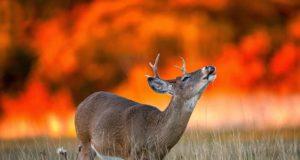 Un animale circondato dalle fiamme