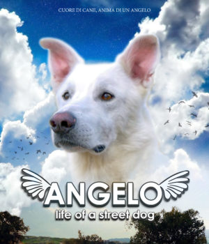 Angelo, life of a street dog