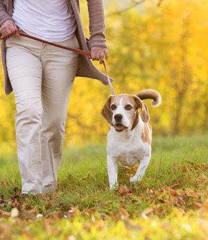 Cane a passeggio nel parco