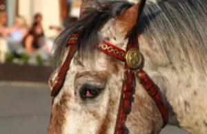 Cavallo da tiro